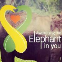 Awaken The Elephant In You